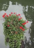 floral stump.jpg