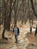 stony path.jpg