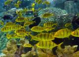 lemon marine.jpg