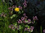 spring bloom.jpg