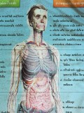 medical chart.jpg