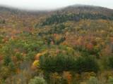 temperate zone autumn.jpg