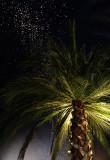 tropical night.jpg