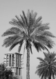wind tower and date palms.jpg