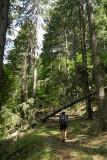 abandoned logging road.jpg