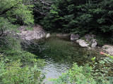 pool in the forest.jpg