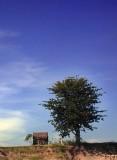 tree and hut.jpg