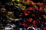 leaves and stream.jpg