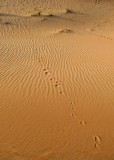 tracks in the sand.jpg