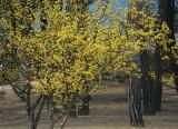 early budding tree.jpg