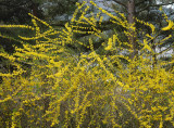 yellow uprising.jpg