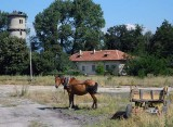horse cart and tower.jpg