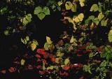 foliage illuminated.jpg