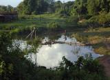 tending the pond.jpg