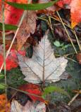 autumn soil.jpg