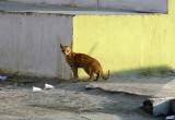 curbside prowl.jpg