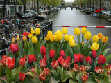 tulips and canal.jpg