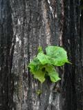 wood and leaf.jpg