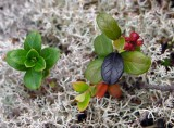 alpine flora.jpg