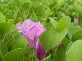beach flower.jpg