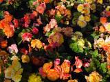 flowery palette.jpg