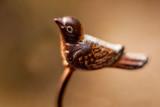 A bird of the gazebo