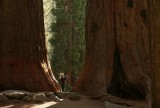 Minigirl or megatrees?