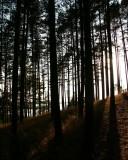 Morrain hill
