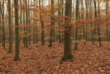 Autumn carpet