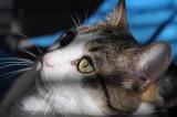 Gatti / My Cats