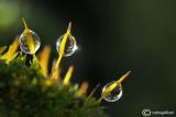 Moss & drops