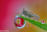 Refraction drops with Cicadellidae