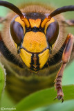Strange faces    :  portrait  insects