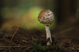 fungi in dark forest