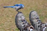 shoe inspection