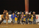 Stock Dog Trials 9.20.13