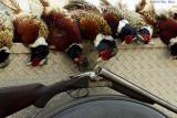 gun and birds 1 02_28_14.jpg