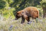 color phase bear.jpg