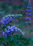 Flowers_001_MG_6645.jpg
