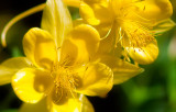 Flowers_005_MG_6820.jpg