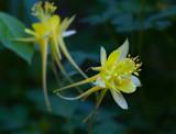Flowers_007_MG_7014.jpg