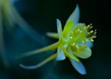 Flowers_008_MG_7016.jpg