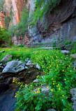 Flowers_012_MG_7140.jpg