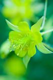 Flowers_023_Q8V1312.jpg