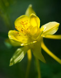 Flowers_024_Q8V1318.jpg