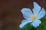 Flowers_032_Q8V0543.jpg