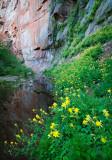 Flowers_036_Q8V7812.jpg