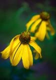 Flowers_037_Q8V8297.jpg