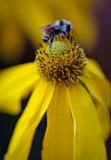 Flowers_038_Q8V8473.jpg