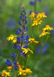Flowers_047_Q8V0604.jpg